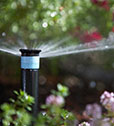 Domestic Irrigation